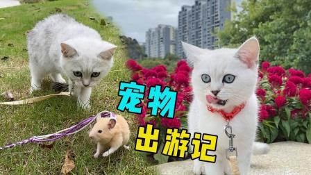 带猫咪和仓鼠出去玩,猫咪帮忙照看小仓鼠