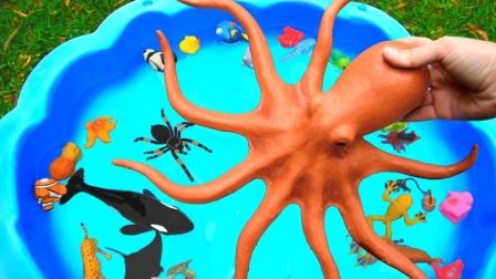 海洋世界总动员:海洋生物的种类超多,都有哪些你是认识的呢?