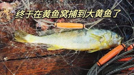 重回去年的大黄鱼窝放网,终于捕到了这种软黄金,不知能值多少钱