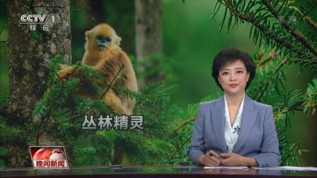 我们和我们的朋友 ·邂逅金丝猴 晚间新闻 20211015 超清版