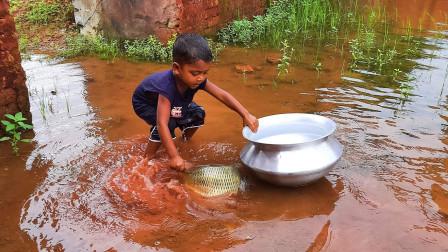 发大水,农村小男孩出来抓抓鱼,发现大鱼了,看看他怎么抓的?