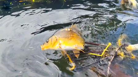 哥哥弟弟野外抓鱼,一人一根鱼叉,一叉就能抓到一条大鱼,厉害了