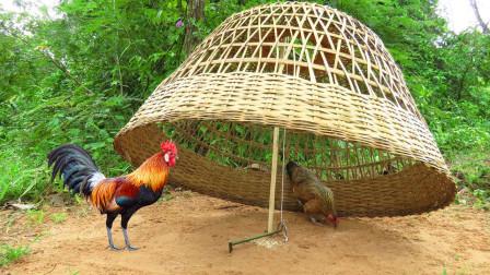 大叔上山抓大公鸡,带上自家的老母鸡去设陷阱,大公鸡来了就别想跑