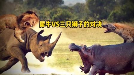 犀牛和三只狡猾狮子的对决 三只狮子都干不过一只犀牛