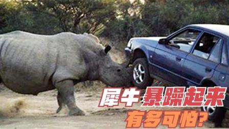 犀牛暴躁起来有多可怕!撞废越野车,把水牛碾压在地