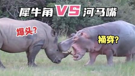 犀牛对决河马!河马张开大嘴犀牛落荒而逃