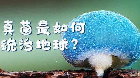 看完这个视频,碗里的菌子更香了《真菌王国》