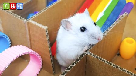 小仓鼠被困迷宫牢笼,竟想偷溜,它能否成功逃脱呢?