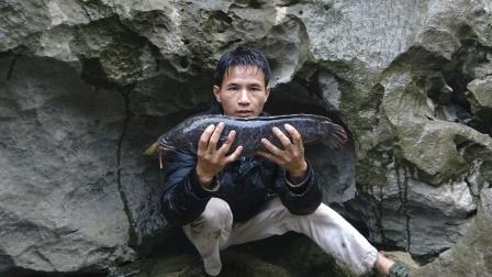 小莫荒岛抓鱼挣钱第二期,大黑鱼生吞一条鲶鱼,活活把自己撑死了