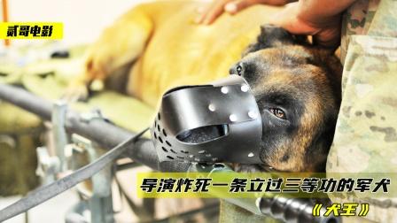导演炸死退伍军犬,只为了追求艺术效果,战士哭到咳血《犬王》
