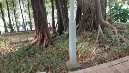 广州荔湾湖公园风景区,,,,,2021年10月16日.