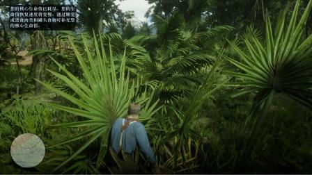 《荒野大镖客2》瓜玛岛原始森林探险