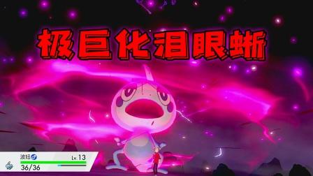 宝可梦剑盾:野外捕捉极巨化木木枭,泪眼蜥使用极巨水流!