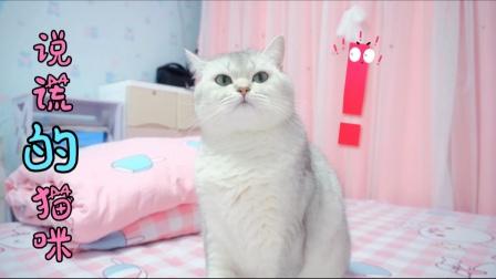 小猫咪说谎骗主人,却被老师揭露真相,你觉得七宝做的对吗