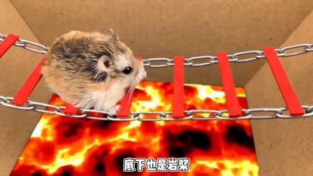 小仓鼠迷失在海洋球障碍,玩的完全忘记闯关