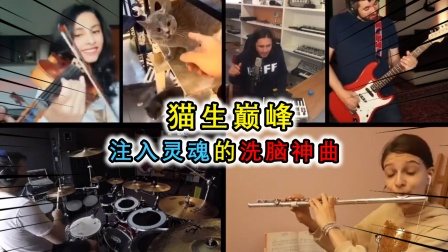 猫叫也能变洗脑神曲?小猫与全世界音乐人合作,共同编出世界名曲