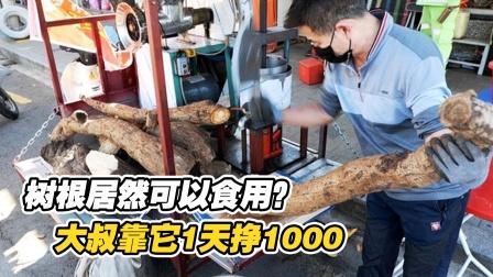 """""""树根""""居然可以食用?大叔将它砍碎榨汁,1天狂赚1000块!"""