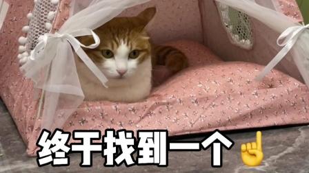 找这么好看又好用的猫窝,太有安全感了吧!