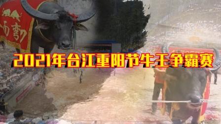 【赛事预告】2021年台江重阳节牛王争霸赛