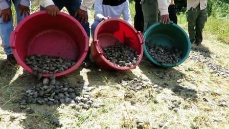 村民放生数万只乌龟,第二天不敢相信!