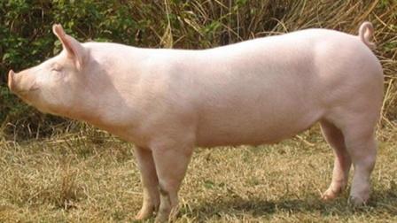 农业农村部:猪肉价格连续8个月回落