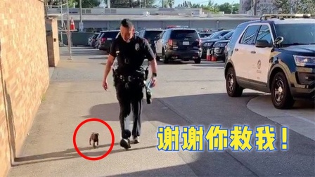 一些人类与动物的互助故事,被警察救助的小狗成为警犬,有专座?