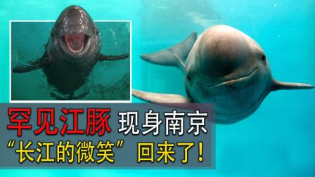 """""""长江的微笑""""回来了!罕见江豚在南京现身,7年前曾在水中哭泣"""