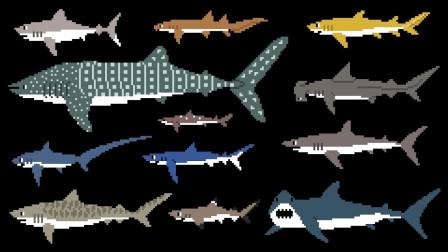 认识海洋动物鲨鱼的种类
