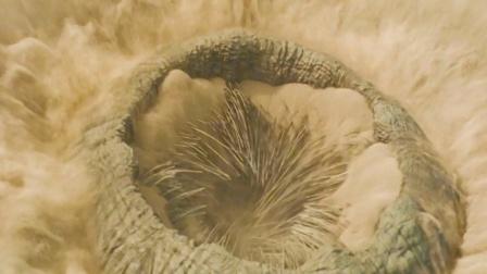 《沙丘》里有1000颗利牙,身长500米的超大沙漠蠕虫