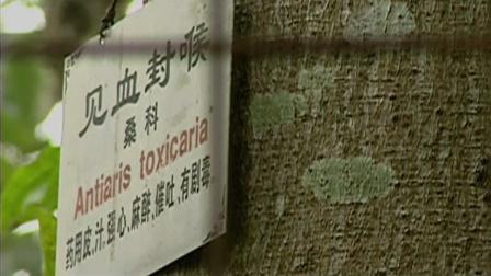武侠小说中见血封喉的毒药,现实中居然真的存在,就在我国海南省
