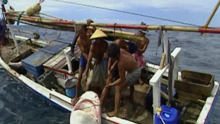 印尼渔民捕捉五米长虎鲨,溜了它两个小时,五个人拉不动