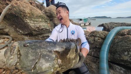 打窝七天的大水坑引来一群深海巨物,一条石斑十几斤大卖1600