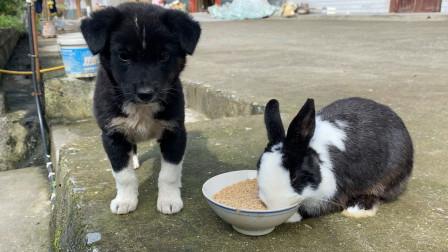 凭实力当大哥,这狗子彻底被兔子征服了