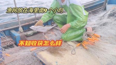 渔网放在海里面9个小时,现在过去拉上来,看下收获怎么样