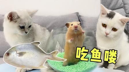 给猫咪和仓鼠蒸条鱼,猫咪竟抢仓鼠的鱼吃