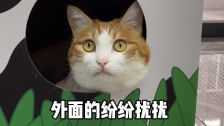 对于胆子小的猫咪来说,这简直就是福音啊!