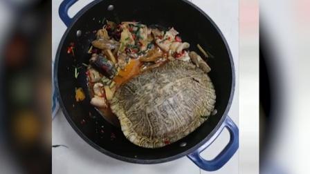 20年宠物龟被偷,找到已是红烧龟只剩龟壳