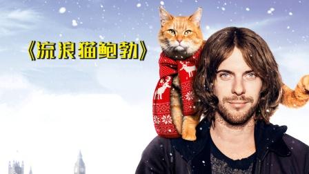 高分治愈电影,根据真实故事改编,一只橘猫拯救流浪汉的一生