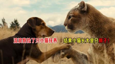 流浪狗捡了只小猫抚养,结果小猫长大是只狮子,勇救狗妈妈!