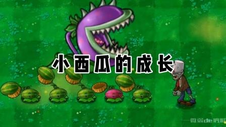 植物大战僵尸:小西瓜的成长