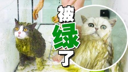 用了岛国寄来的洗浴用品,结果猫变绿了?