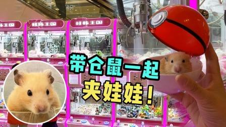 小仓鼠陪主人一起去商场娃娃机上夹娃娃玩
