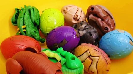 黄色盆子里发现一堆恐龙蛋玩具 赶紧变形看看都是什么恐龙吧