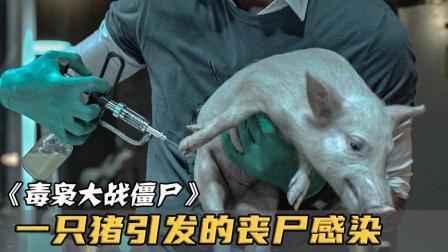 饿狼想吃猪肉却被反杀!(一)