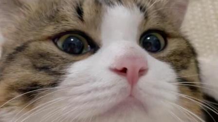 小猫咪就是要吃胖胖的才可爱呀