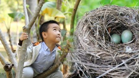 3个小学生掏鸟蛋,意外发现千年稀世国宝