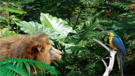 《荒野大镖客2》瓜玛岛热带雨林探险 第三集  根据游戏实景制作