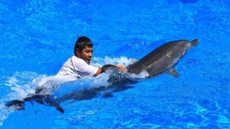 当人掉进海里后,海豚为何会主动救人?
