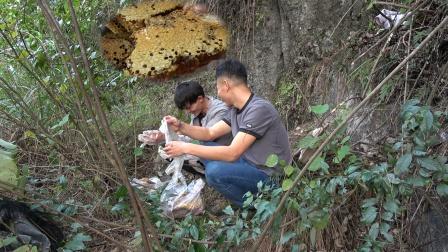 小明和老表挖到一窝老巢蜂蜜,刚发朋友圈就被抢光,这次赚大了