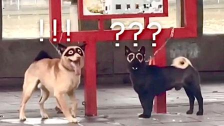 这辈子没见过长得这么对称的狗